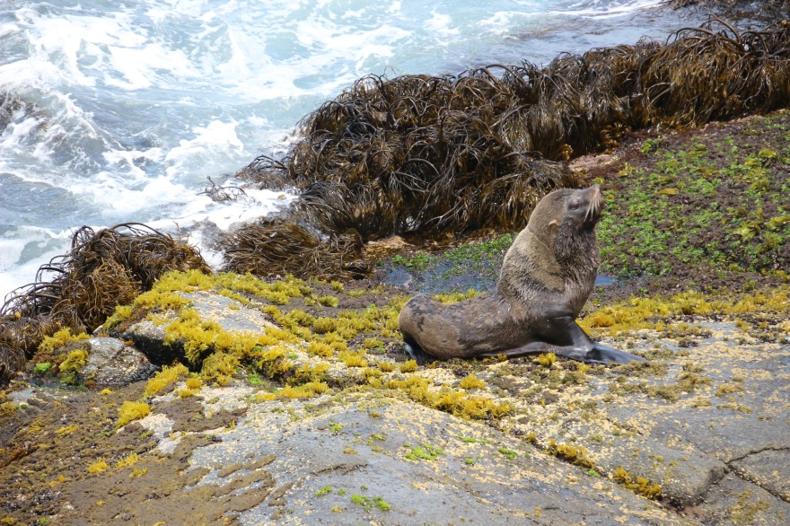 01_maitencillo near penguin island in chile