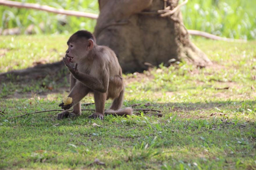 25_la isla de los monos