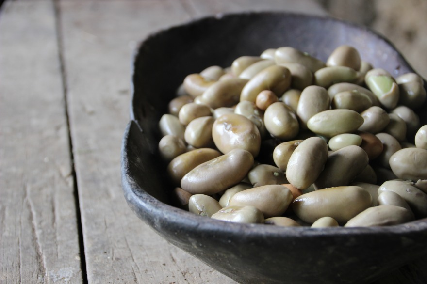 34_beans from a tree
